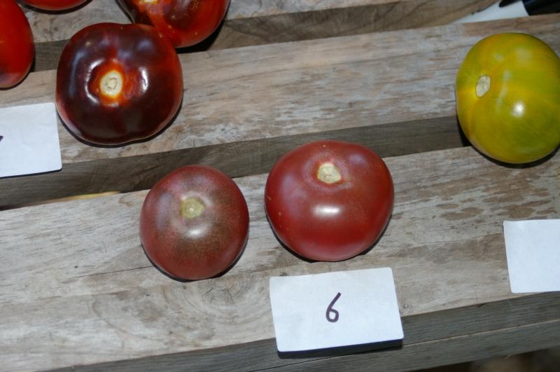 Purple mystery tomato
