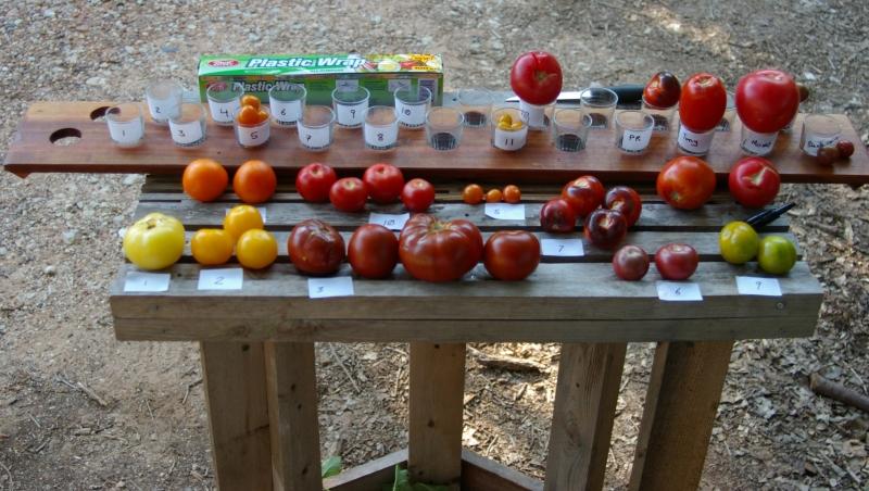 Tomato setup