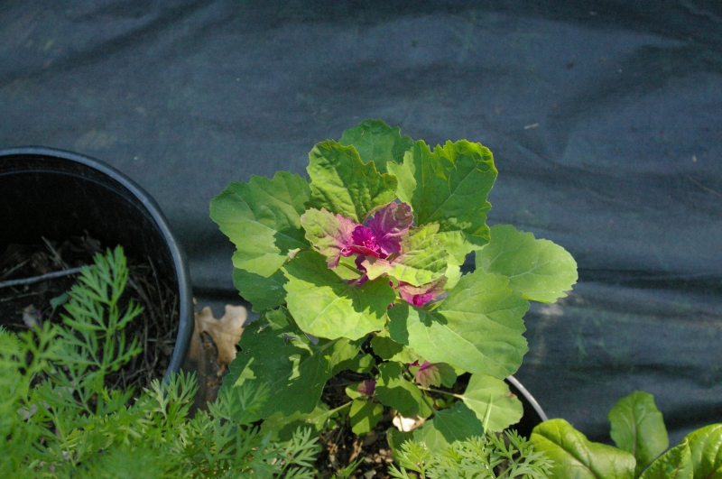 garden-shots-march-09-15